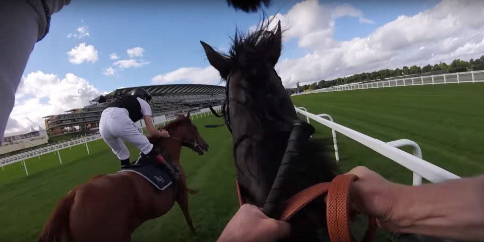 Ryan Moore and Pat Smullen ride the QIPCO Champion Stakes