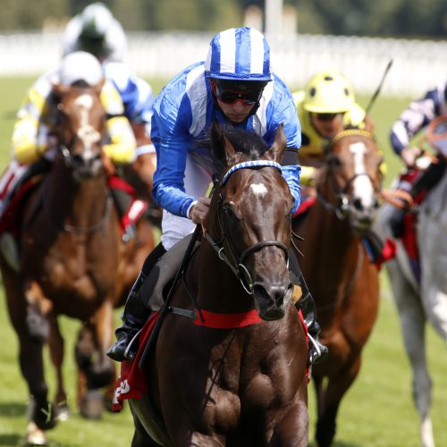 Qipco sussex stakes betting on sports patsikas betting