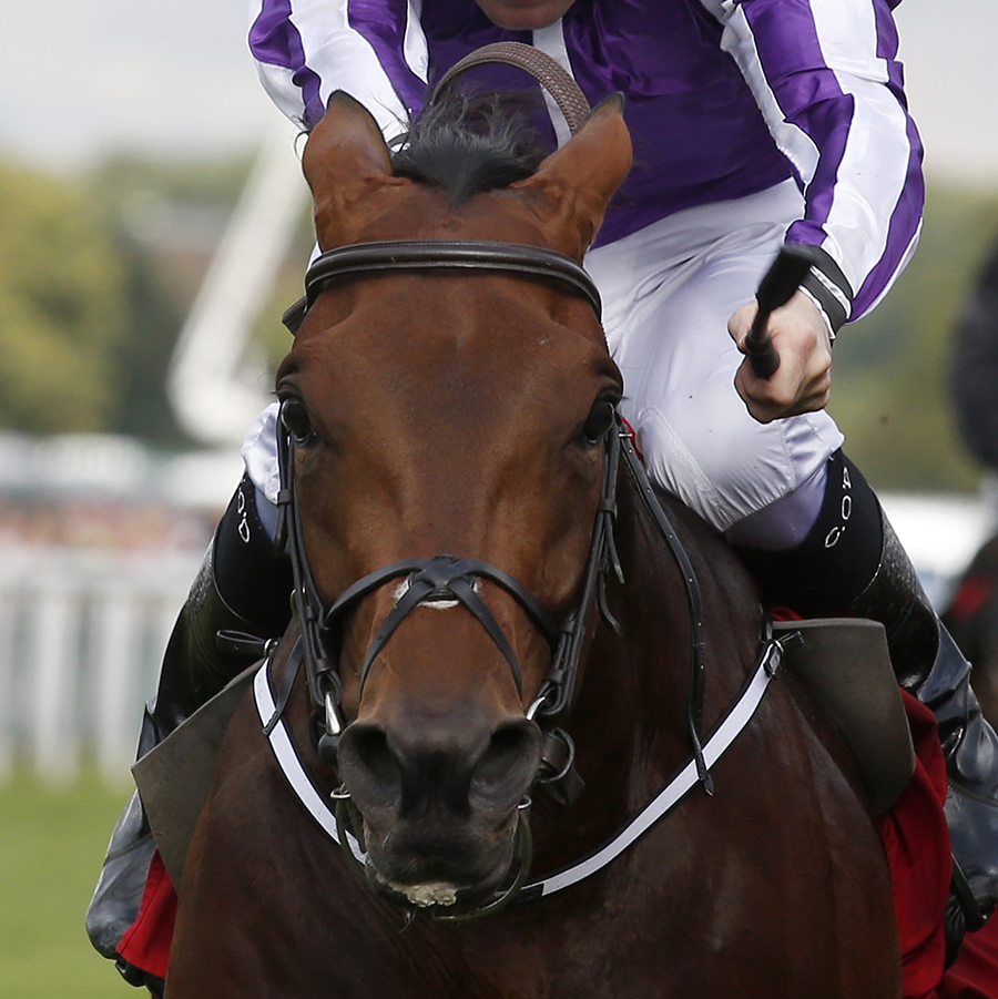 "BONDI BEACH and COLM O'DONOGHUE Take The Ladbrokes St Leger from Andrea Atzeni and Simple Verse Doncaster Racecourse 12-09-2015 Pic: Louise Pollard/Racingfotos.com  THIS IMAGE IS SOURCED FROM AND MUST BE BYLINED ""RACINGFOTOS.COM"""