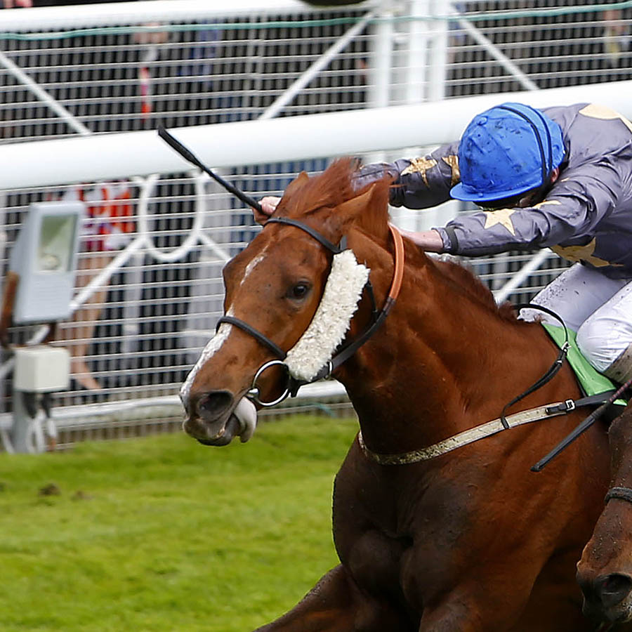 "Suegioo and Ryan Moore (blue cap) winning The StanJames.com Chester Cup from Angel Gabrial Chester 7.5.14 Pic Dan Abraham - racingfotos.com  THIS IMAGE IS SOURCED FROM AND MUST BE BYLINED ""RACINGFOTOS.COM"""