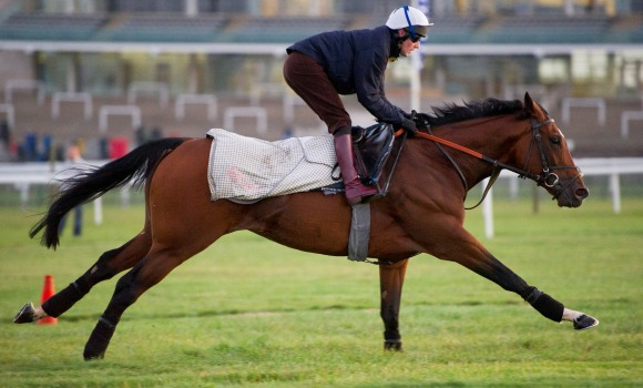 FRANKEL GALLOPING ON NEWMARKET'S RACECOURSE SIDE