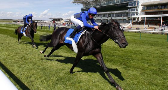 """Emotionless and William Buick  working on the rowley mile course ready for the Qipco 2000 Guineas  Newmarket 13.4.16 Pic Dan Abraham-racingfotos.com  THIS IMAGE IS SOURCED FROM AND MUST BE BYLINED """"RACINGFOTOS.COM"""""""
