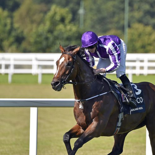 "HIGHLAND REEL (left, Ryan Moore) leads round the home turn from WINGS OF DESIRE (right) in The King George VI and Queen Elizabeth Stakes Ascot 23 Jul 2016 - Pic Steven Cargill / Racingfotos.com  THIS IMAGE IS SOURCED FROM AND MUST BE BYLINED ""RACINGFOTOS.COM"""