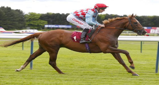Red Verdon will contest the St Leger