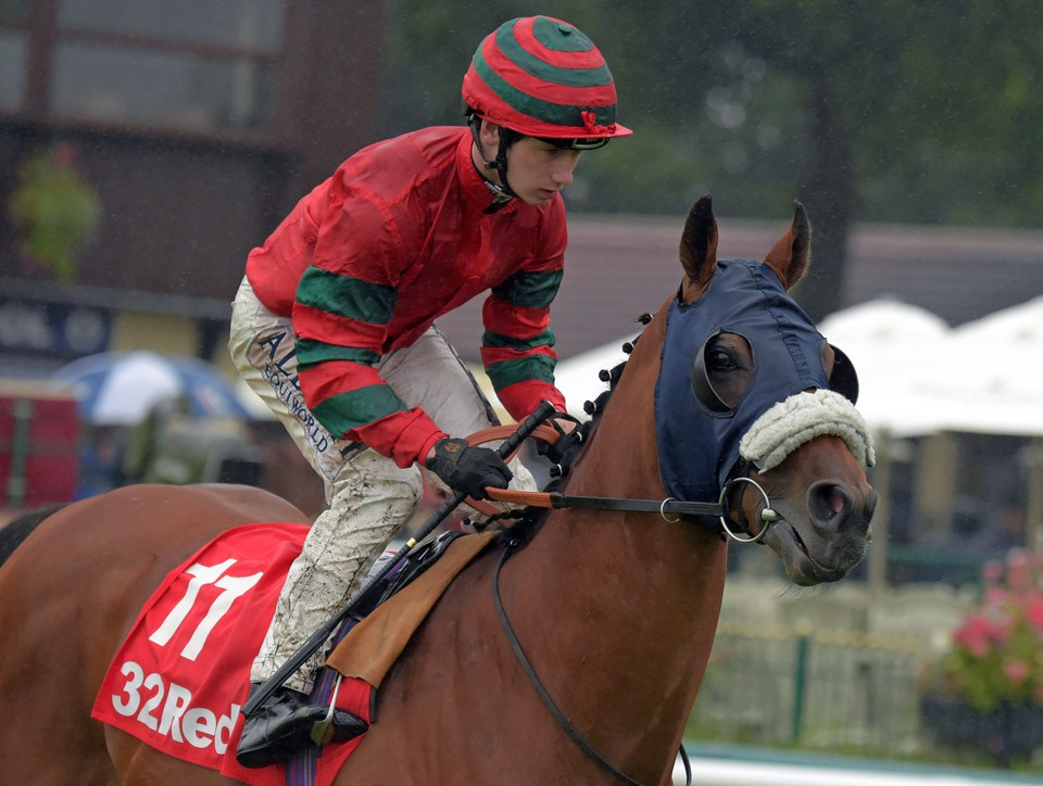 """DUNGANNON at Haydock 3-9-16.  THIS IMAGE IS SOURCED FROM AND MUST BE BYLINED """"RACINGFOTOS.COM"""""""