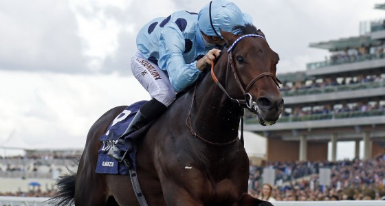 Almanzor 2017 Middle Distance