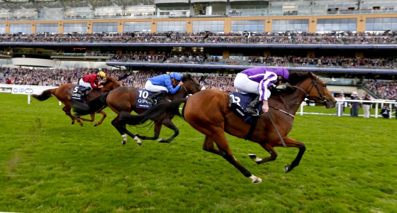 "Minding and Ryan Moore (purple) winning The Queen Elizabeth II Stakes from Ribchester (blue) and Lightning Spear  Ascot 15.10.16 Pic Dan Abraham-racingfotos.com  THIS IMAGE IS SOURCED FROM AND MUST BE BYLINED ""RACINGFOTOS.COM"""