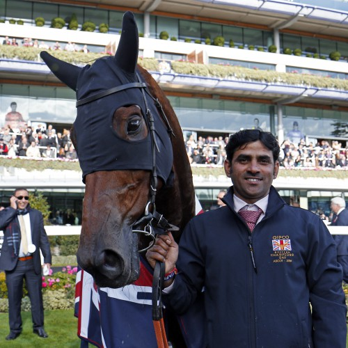 "SHEIKHZAYEDROAD after The Qipco British Champions Sprint Stakes Ascot 15 Oct 2016 - Pic Steven Cargill / Racingfotos.com  THIS IMAGE IS SOURCED FROM AND MUST BE BYLINED ""RACINGFOTOS.COM"""