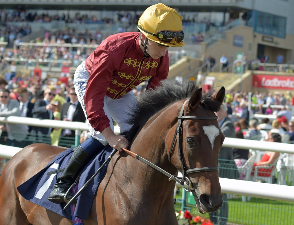 "RICH LEGACY at Doncaster 8-9-16.  THIS IMAGE IS SOURCED FROM AND MUST BE BYLINED ""RACINGFOTOS.COM"""