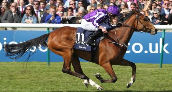 Minding 1000 Guineas