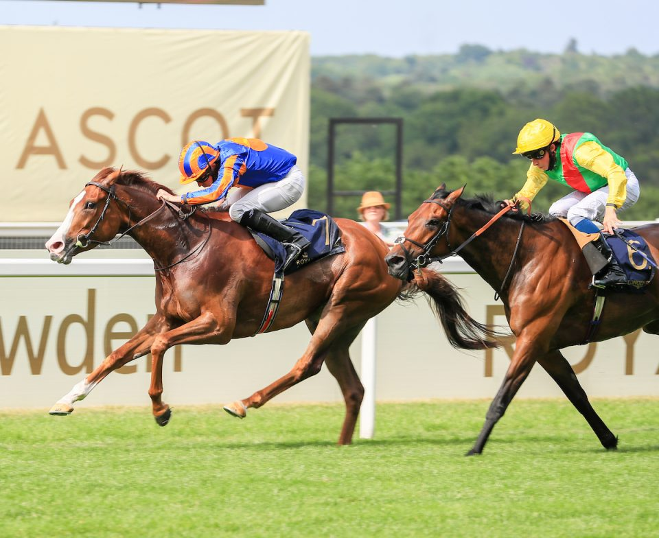 Love wins the St James's Palace Stakes