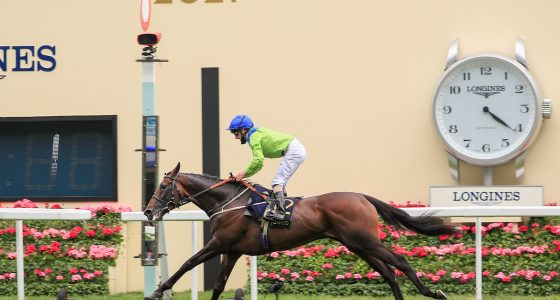 Subjectivist cruises home to win the Gold Cup